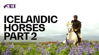 The Uniqueness of Icelandic Horses - PART 2: Horse Tourism in Iceland | Equestrian World