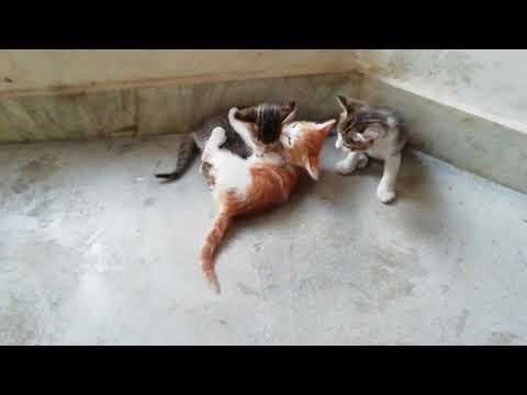 funny cats compilation - UCGiuHhYNs-162gd-0bGUtsQ