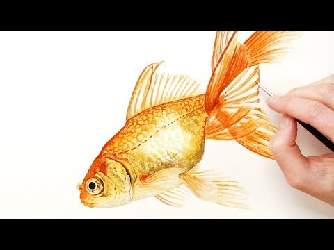 How to paint a shiny goldfish in watercolour (with no metallic paints) with Anna Mason