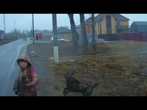 МУЖЧИНА СПАС РЕБЁНКА, НА КОТОРОГО НАБРОСИЛАСЬ УЛИЧНАЯ СОБАКА / A man saved a child from a dog