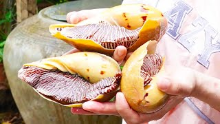 03 Giant Sea Snails, Clean Cook Eat, Delicious Boiled Snails, Cooking Skill