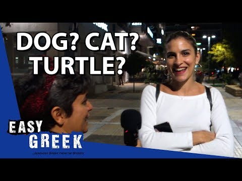 Dog, cat or turtle? Greeks and their pets | Easy Greek 47 photo