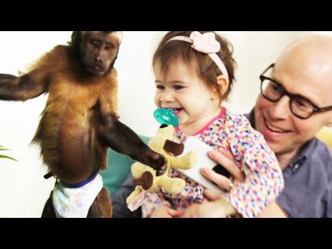 Father Surprises Daughter With A Monkey