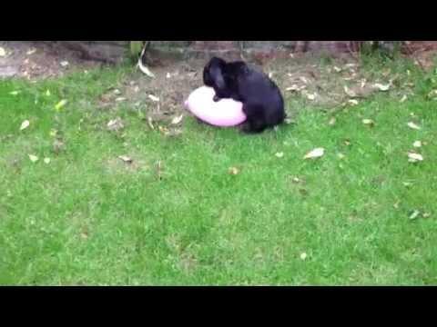 Zabawa z balonem może się źle skończyć!
