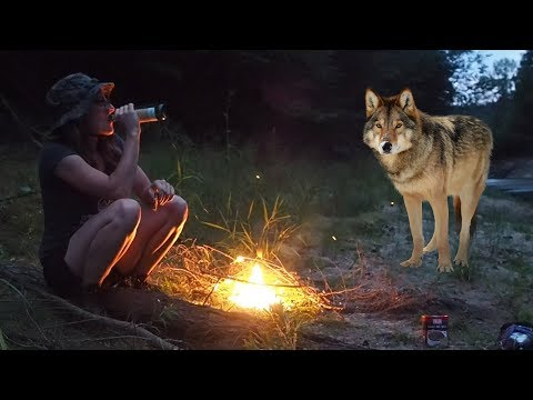 Camping near a pack of WOLVES
