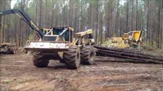 Forest Site Visit Parnell Logging Alabama USA