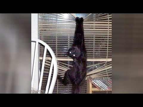 ANIMALS will NEVER LET YOU BE BORED! - Super HILARIOUS ANIMAL videos