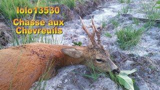 Tir d'été du Chevreuil dans les Landes.