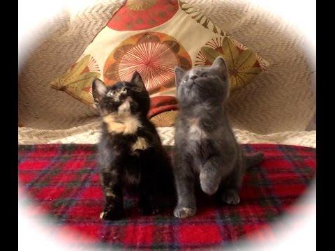 Kitten Jam - Turn Down For What Video (cute, funny cats/kittens dancing) (ORIGINAL) - UCqd1em5MkRTMKe9lbEyx3DA