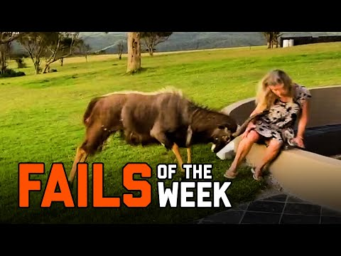 Back To Nature | Fails of the Week (February 2021)