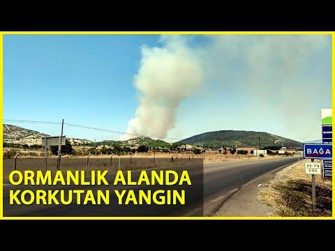 Foça'da Korkutan Orman Yangını!
