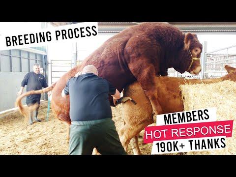 Kn & Rabbani Cattle Farm 2017