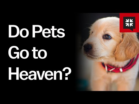 Do Pets Go to Heaven? // Ask Pastor John