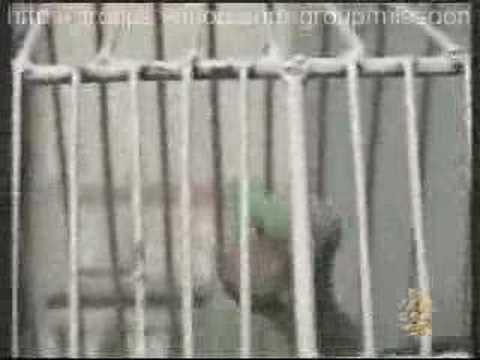 Parrot Recites the Holy Quran