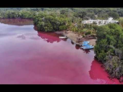 Breaking Blood Red Water In Mexico Apocalyptic Sign
