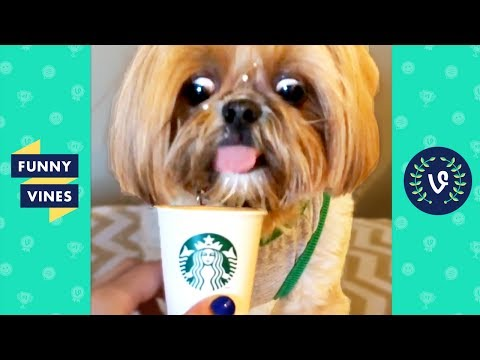 TRY NOT to LAUGH or GRIN: Funny Animals Vines Compilation 2017 | Funny Vines Videos - UCd07rKJ7Q0pg5ths7Pz8k8Q