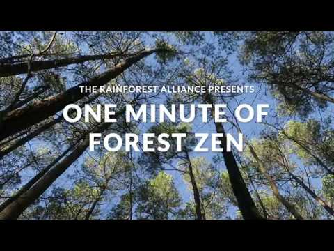 One Minute of Forest Zen – North Carolina