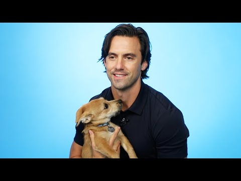 Milo Ventimiglia Plays With Puppies While Answering Fan Questions