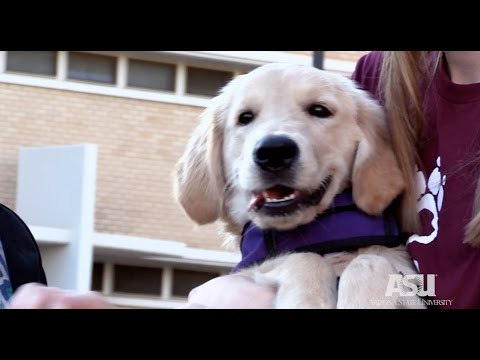 Got a Minute: Are Dogs Smart?