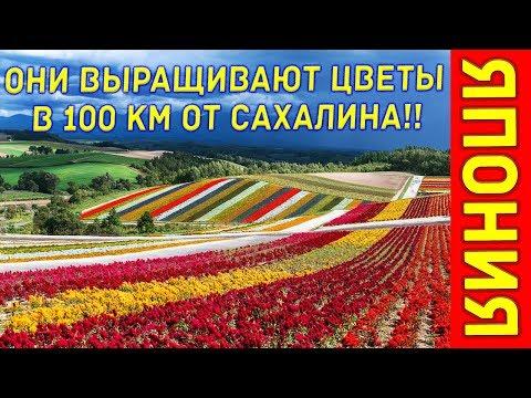 Япония 2. Они выращивают цветы на Хоккайдо! Это совсем рядом с Курилами и Сахалином