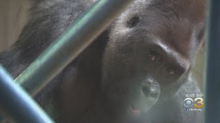 Primate Reserve At Philadelphia Zoo Celebrating 20 Years