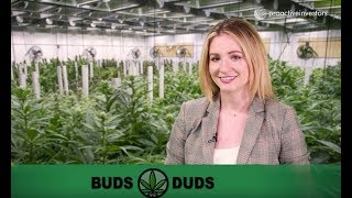 Buds & Duds: Cannabis industry continues to cool off with CannTrust, Curaleaf still reeling