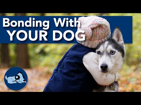 How to Strengthen Your Bond with Your Dog!