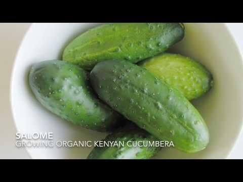 Kenyan cucumbers