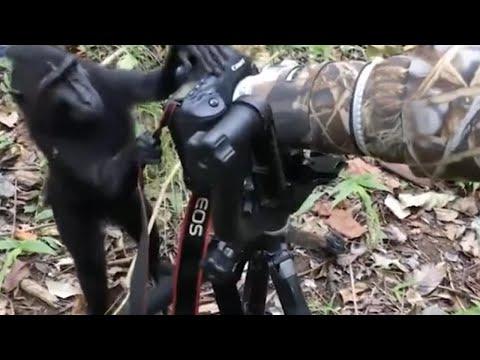 Kameranın başına geçen maymun sosyal medyada viral oldu