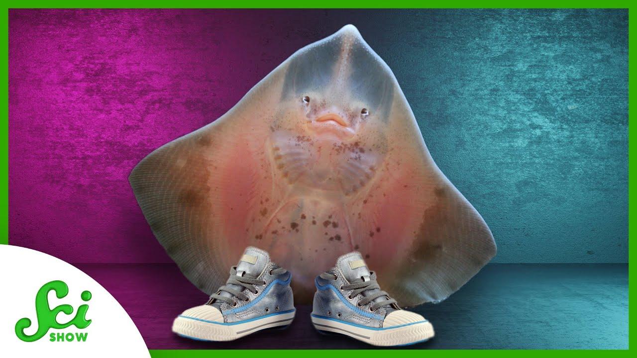 The Fish that Strolls on the Sea Floor