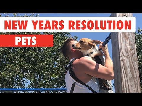 New Years Resolutions Pets - UCPIvT-zcQl2H0vabdXJGcpg