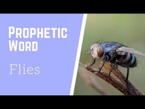 Prophetic Vision - Flies (Must Watch)