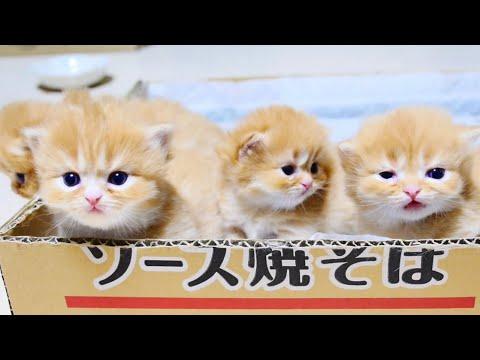 Cute kittens videos compilation 2019 - UC1Edp5EsgrnBcSZy87oZLlg