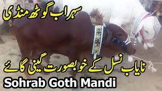 Smallest Cow Sohrab Goth Mandi Karachi Latest Update 22 July 2019   Little Cow Gaini in Karachi