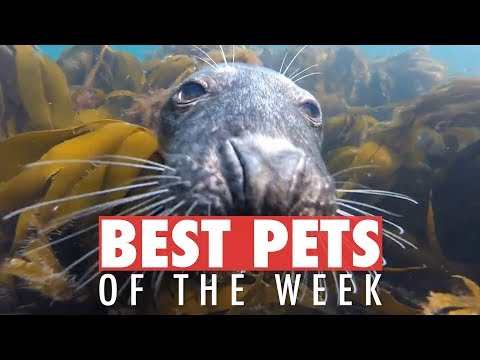 Best Pets of the Week | July 2018 Week 3 - UCPIvT-zcQl2H0vabdXJGcpg