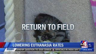 Lowering euthanasia rates