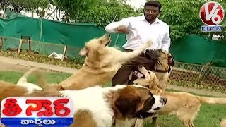 Dogs Hostel In Gachibowli | Happy Dogs Kennel Training School | Teenmaar News | V6 News