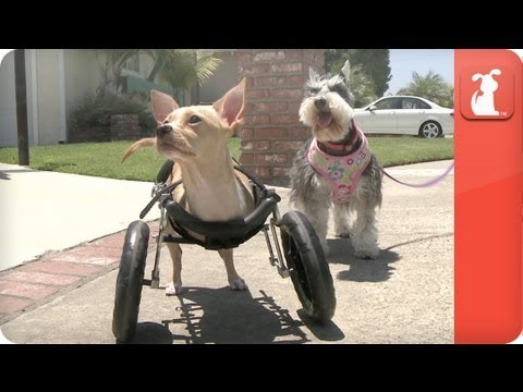 My Forever Home - I love my two legged dog. - UCPIvT-zcQl2H0vabdXJGcpg