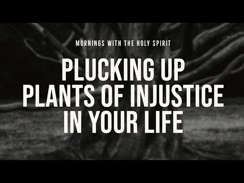 Plucking Up Plants of Injustice in Your Life (Prophetic Prayer & Prophecy)