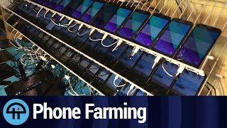 Everyday Phone Farmers