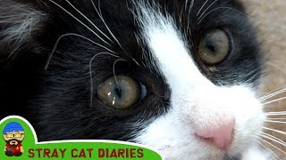 Stray Cat Diaries EP9 - The Not So Stray Kittens