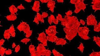 Red Roses Falling Hd | Motion Graphics