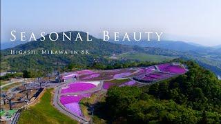 Seasonal Beauty - Higashi M...