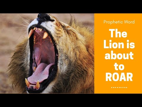 Prophetic Word - The Lion is about to ROAR