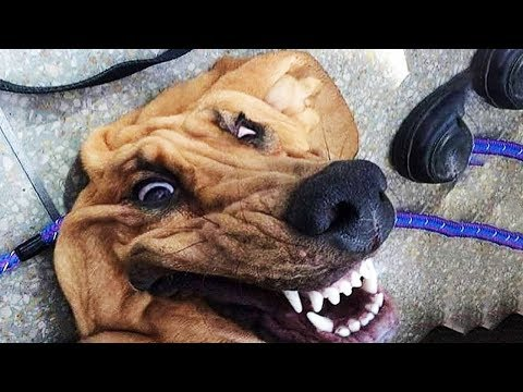 🤣 Funniest and Cutest Cats 😻 and Dogs 🐶 - Funny Pet Animals' Life