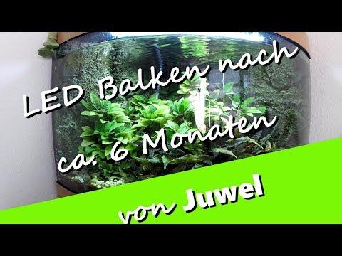 Juwel HeliaLux LED Aquarium Beleuchtung nach ca. 6 Monaten im Trigon 190 - UCNWVhopT5VjgRdDspxW2IYQ
