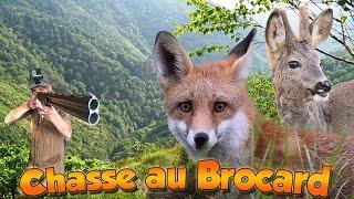 Approche au Brocard - chasse en Corrèze