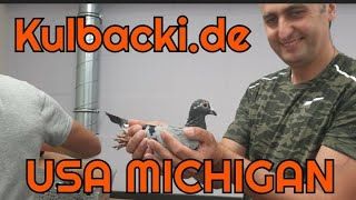 Moja wysyłka do Ameryki Michigan, kwarantanna live unikalne nagranie my pigeons for USA MICHIGAN