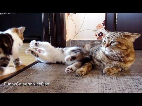 Cute Kittens playing While Mom cat is napping - UCERQZLRMniqsMlgBxme32cQ