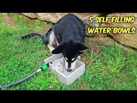 5 Self Refilling Water Bowl For Pets - UCe_vXdMrHHseZ_esYUskSBw